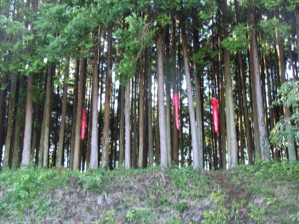 林の中のオブジェ