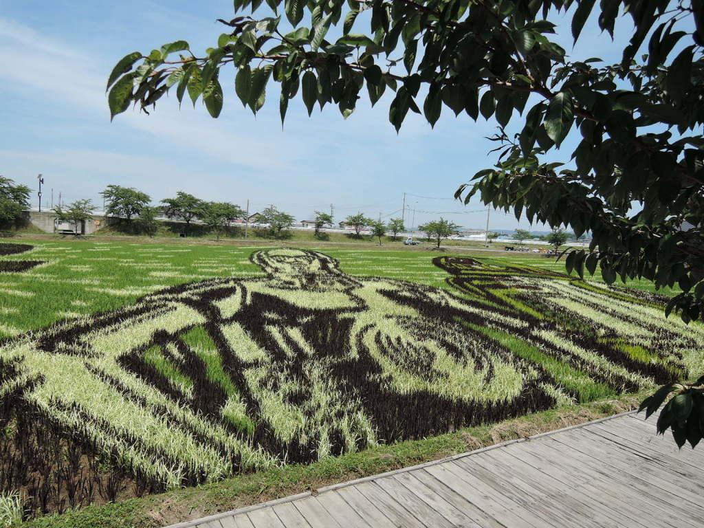 平川市の田圃タート風景(下から)