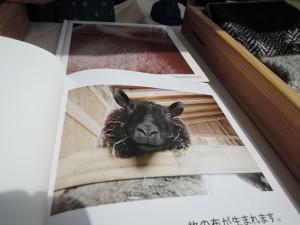 目を引く説明資料 広島の森音さんブース 羊毛の持ち主