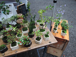 榊麻美植物研究所さんのブース風景
